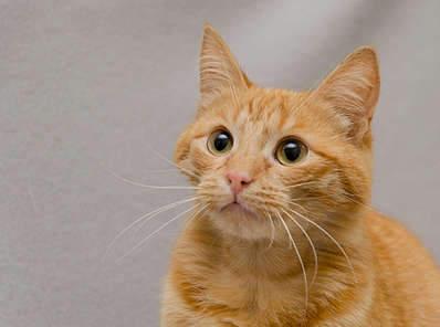 1920 X 1425 188.1 Kb 1920 X 1289 190.7 Kb Передержка для животных Пес Барбос отдает животных и пока не принимает кошек!