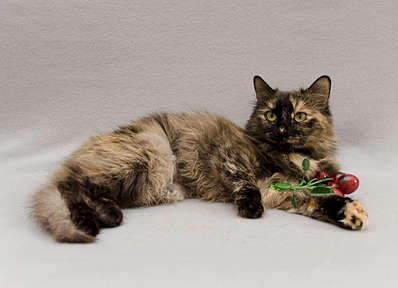1920 X 1387 221.1 Kb Передержка для животных Пес Барбос отдает животных и пока не принимает кошек!