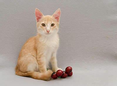 1920 X 1411 185.1 Kb Передержка для животных Пес Барбос отдает животных и пока не принимает кошек!