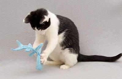 1920 X 1239 194.3 Kb Передержка для животных Пес Барбос отдает животных и пока не принимает кошек!