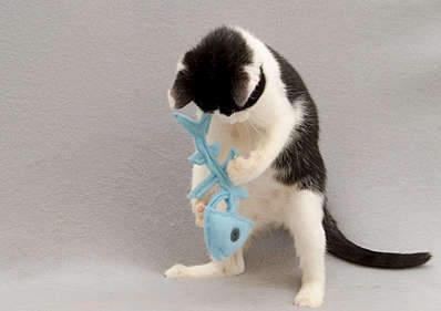 1920 X 1353 205.8 Kb 1920 X 1239 194.3 Kb Передержка для животных Пес Барбос отдает животных и пока не принимает кошек!