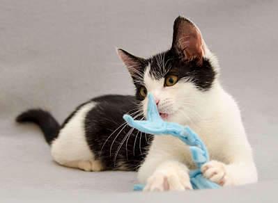 1920 X 1403 163.7 Kb 1920 X 1353 205.8 Kb 1920 X 1239 194.3 Kb Передержка для животных Пес Барбос отдает животных и пока не принимает кошек!