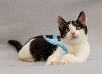 1920 X 1395 174.2 Kb 1920 X 1403 163.7 Kb 1920 X 1353 205.8 Kb 1920 X 1239 194.3 Kb Передержка для животных Пес Барбос отдает животных и пока не принимает кошек!