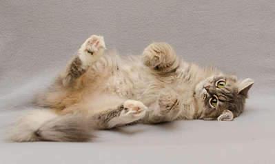 1920 X 1143 178.9 Kb 1920 X 1688 241.3 Kb Передержка для животных Пес Барбос отдает животных и пока не принимает кошек!