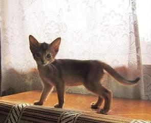 1920 X 1559 301.5 Kb 1920 X 1440 438.9 Kb Веточка для Коржиков и абиссинских кошек