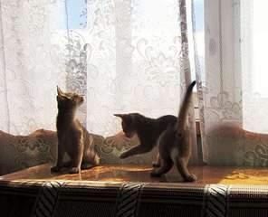 1920 X 1554 382.4 Kb 1920 X 1559 301.5 Kb 1920 X 1440 438.9 Kb Веточка для Коржиков и абиссинских кошек
