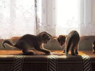 1920 X 1440 316.4 Kb 1920 X 1554 382.4 Kb 1920 X 1559 301.5 Kb 1920 X 1440 438.9 Kb Веточка для Коржиков и абиссинских кошек