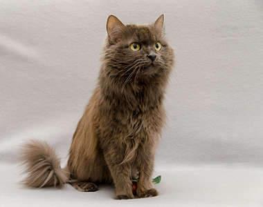 1920 X 1514 195.6 Kb Передержка для животных Пес Барбос отдает животных и пока не принимает кошек!