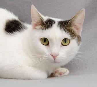 1920 X 1708 242.1 Kb Передержка для животных Пес Барбос отдает животных и пока не принимает кошек!