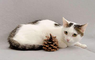 1920 X 1213 189.7 Kb 1920 X 1708 242.1 Kb Передержка для животных Пес Барбос отдает животных и пока не принимает кошек!