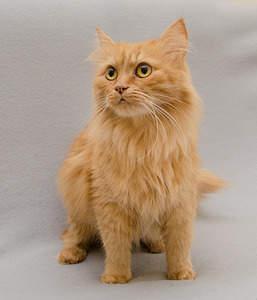 1714 X 2000 305.7 Kb Передержка для животных Пес Барбос отдает животных и пока не принимает кошек!