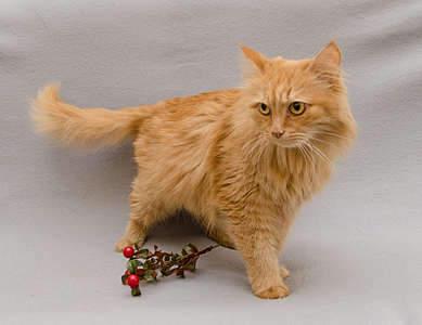 1920 X 1477 269.8 Kb 1714 X 2000 305.7 Kb Передержка для животных Пес Барбос отдает животных и пока не принимает кошек!