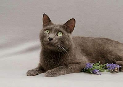 1920 X 1367 223.6 Kb Передержка для животных Пес Барбос отдает животных и пока не принимает кошек!