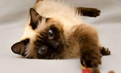 1920 X 1154 166.2 Kb Передержка для животных Пес Барбос отдает животных и пока не принимает кошек!