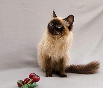 1920 X 1652 251.3 Kb 1920 X 1154 166.2 Kb Передержка для животных Пес Барбос отдает животных и пока не принимает кошек!