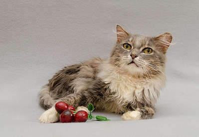 1920 X 1323 212.0 Kb Передержка для животных Пес Барбос отдает животных и пока не принимает кошек!