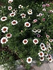 1536 X 2048 507.8 Kb Цветы