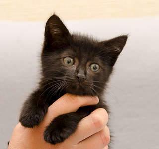 1920 X 1795 251.4 Kb Передержка для животных Пес Барбос отдает животных и пока не принимает кошек!