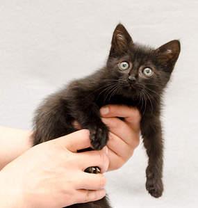 1905 X 2000 273.1 Kb 1920 X 1795 251.4 Kb Передержка для животных Пес Барбос отдает животных и пока не принимает кошек!