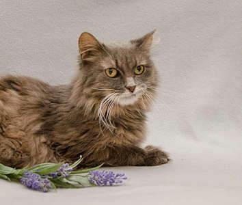 1920 X 1627 270.8 Kb Передержка для животных Пес Барбос отдает животных и пока не принимает кошек!
