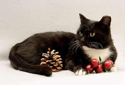 1920 X 1307 225.5 Kb 1920 X 1627 270.8 Kb Передержка для животных Пес Барбос отдает животных и пока не принимает кошек!