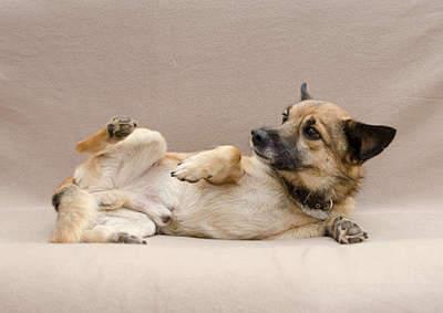 1920 X 1359 249.2 Kb Передержка для животных Пес Барбос отдает животных и пока не принимает кошек!