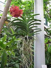 1080 X 1440 252.5 Kb 1920 X 1440 340.7 Kb 'Сад в стекле'. Композиции из растений.