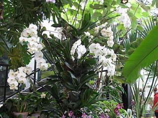 1920 X 1440 417.4 Kb 1080 X 1440 252.5 Kb 1920 X 1440 340.7 Kb 'Сад в стекле'. Композиции из растений.