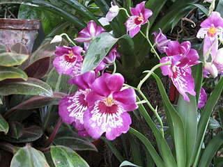 1920 X 1440 283.8 Kb 'Сад в стекле'. Композиции из растений.