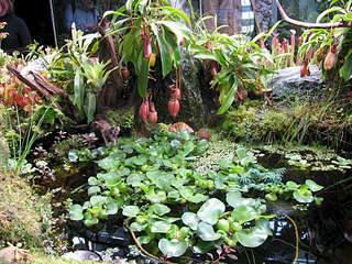 1920 X 1440 513.5 Kb 1920 X 1440 283.8 Kb 'Сад в стекле'. Композиции из растений.