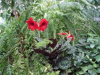 1920 X 1440 546.0 Kb 1920 X 1440 511.4 Kb 1920 X 1440 368.0 Kb 1920 X 1440 513.5 Kb 1920 X 1440 283.8 Kb 'Сад в стекле'. Композиции из растений.