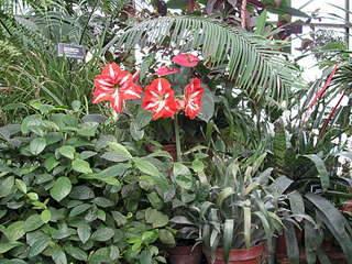 1920 X 1440 433.2 Kb 'Сад в стекле'. Композиции из растений.