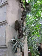 1080 X 1440 280.6 Kb 1920 X 1440 433.2 Kb 'Сад в стекле'. Композиции из растений.