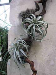 1080 X 1440 228.1 Kb 1080 X 1440 280.6 Kb 1920 X 1440 433.2 Kb 'Сад в стекле'. Композиции из растений.