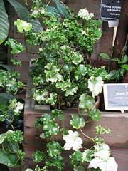 1080 X 1440 239.9 Kb 'Сад в стекле'. Композиции из растений.