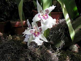 1920 X 1440 290.1 Kb 1080 X 1440 239.9 Kb 'Сад в стекле'. Композиции из растений.