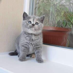 1920 X 1920 392.4 Kb Питомник британских кошек Cherry Berry's. У нас родились котята!