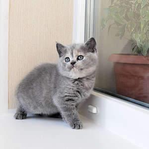 1920 X 1920 347.1 Kb 1920 X 1920 392.4 Kb Питомник британских кошек Cherry Berry's. У нас родились котята!