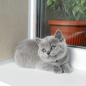 1920 X 1920 432.3 Kb 1920 X 1920 467.7 Kb Питомник британских кошек Cherry Berry's. У нас родились котята!