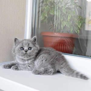 1920 X 1920 377.5 Kb Питомник британских кошек Cherry Berry's. У нас родились котята!