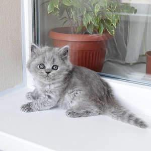 1920 X 1920 456.9 Kb 1920 X 1920 377.5 Kb Питомник британских кошек Cherry Berry's. У нас родились котята!