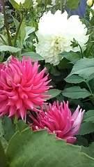 1836 X 3264 732.9 Kb Цветы