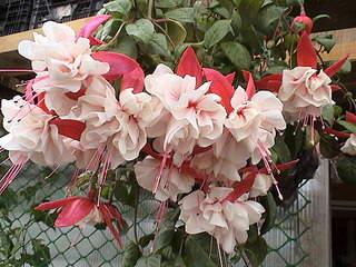 1152 X 864 428.9 Kb Продажа редких растений из питомника 'Мой сад'