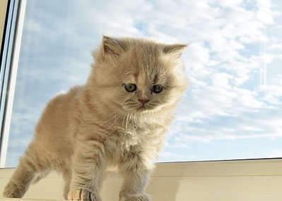 1920 X 1371 211.0 Kb Питомник британских кошек Cherry Berry's. У нас родились котята!
