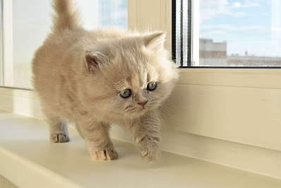 1920 X 1281 173.1 Kb 1920 X 1371 211.0 Kb Питомник британских кошек Cherry Berry's. У нас родились котята!