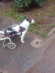 1080 X 1440 163.9 Kb Боря, сбитая собака, Авангардная, скорее всего не будет видеть