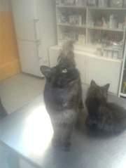 453 X 604 33.9 Kb Кошки в стационаре Ветсервиса. Нужна материальная помощь!