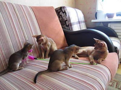1920 X 1440 313.3 Kb 1920 X 1440 358.9 Kb Веточка для Коржиков и абиссинских кошек