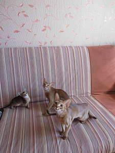1080 X 1440 204.0 Kb 1920 X 1440 313.3 Kb 1920 X 1440 358.9 Kb Веточка для Коржиков и абиссинских кошек