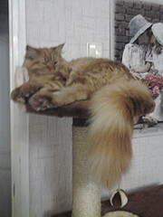 1536 X 2048 787.8 Kb 1536 X 2048 986.0 Kb Мишель, моя кошка. Кошка-Симошка.